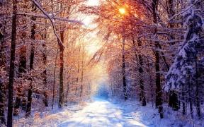 Winter-trees-winter-22173860-1920-1200